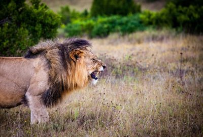 5 of Africa's Most Dangerous Animals And How To Survive Them Part 2