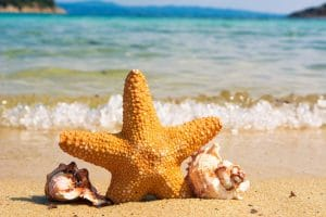 starfish and two shells on beach