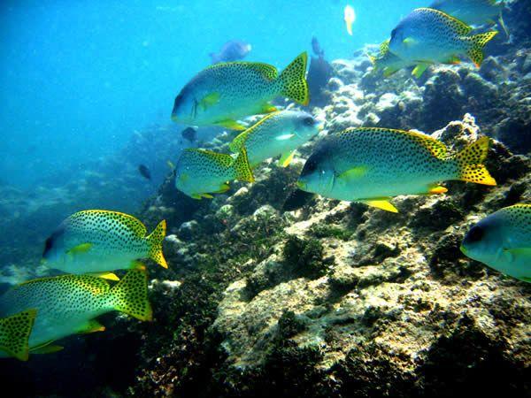 Fish at Malindi Marine National Park